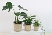 [크기변환]plants-3310274_1280.jpg