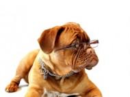 [크기변환]dog-2794681_1280.jpg